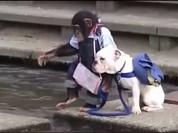 Cười ngất xem Khỉ dắt Chó qua sông