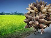 Việt Nam giành giải thưởng nhiếp ảnh du lịch ấn tượng