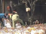 Video: Sởn gai ốc xem heo bị bơm chất lạ trước khi vào lò mổ