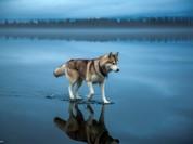 """20 bức ảnh """"có hồn"""" nhất của National Geographic"""