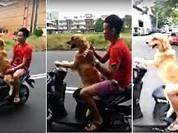 Nín thở xem chó lái xe ga chở người