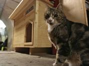 Các chú mèo Hermitage trở thành điểm đến hấp dẫn nhất thế giới