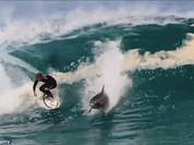 """Video: Kinh ngạc xem cá heo """"lướt sóng"""" cùng con người"""