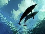 Phát hiện đại dương ngầm khổng lồ 2,7 tỷ năm tuổi