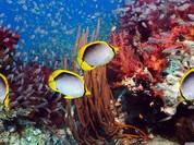 Video: Kinh dị những sinh vật đáy biển