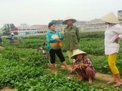 Người trồng rau đòi bồi thường vì VTV dàn dựng clip gây hiệt hại nặng nề