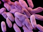 Siêu vi khuẩn cứ 3 giây lại giết chết 1 người