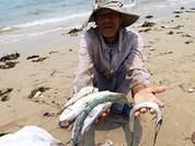 Nhìn lại 3 tháng điều tra nguyên nhân cá chết hàng loạt