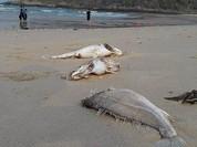 Video: Loạt bằng chứng cáo buộc Formosa làm cá chết hàng loạt
