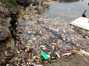 3km thượng nguồn sông Sài Gòn trắng xác cá phơi