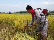 Cận cảnh máy cắt lúa vùng đồng trũng nâng cao gấp 10 lần năng suất