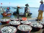 Điểm danh 154 loại hải sản miền Trung chưa được ăn