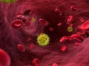 Anh đã chữa thành công HIV?