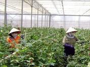 Hà Nội: Thiếu liên kết để phát triển CNC trong nông nghiệp
