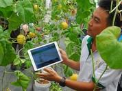 Đà Nẵng quy hoạch 7 vùng nông nghiệp công nghệ cao