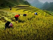 Cuộc thi ảnh Di sản Việt Nam mới mở rộng thêm đề tài 'Chợ'