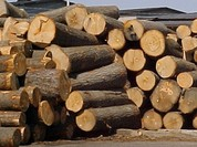 Tịch thu gỗ sai luật, chủ tịch tỉnh Tiền Giang thua kiện
