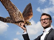 Robot chim ưng bảo vệ không phận phi trường