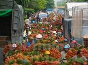 Nghi vấn gây tắc nghẽn thủ phủ vải Bắc Giang để ép giá thu mua