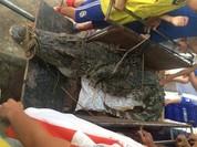Bắt được cá sấu dài 3m ở hồ câu nổi tiếng Hà Nội