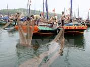 Trợ giúp sinh kế cho 263.000 lao động bị thiệt hại do sự cố cá chết