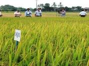 Việt Nam đứng thứ 8 trong nghiên cứu đột biến tạo giống