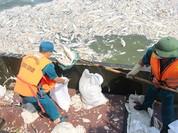 Tổng Bí thư muốn làm rõ vụ cá Hồ Tây chết hàng loạt
