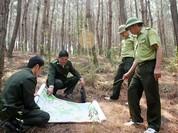 Chủ rừng được thành lập lực lượng bảo vệ rừng chuyên trách