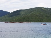 Phát triển Bắc Vân Phong thành đơn vị hành chính-kinh tế đặc biệt
