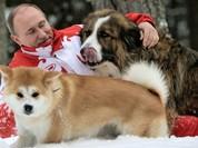 Báo Nga: Nhật Bản đang suy nghĩ lại việc tặng ông Putin con chó Akita Inu thứ hai