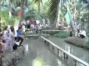 Trò chơi đạp xe đi qua cầu khỉ
