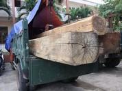 Phát hiện hạt trưởng kiểm lâm là chủ... gỗ lậu