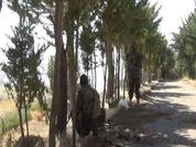 Quân đội Syria đánh chiếm cao điểm ở dãy núi Qalamoun