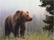Gấu làm gì khi không có con người xung quanh?