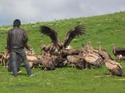Tục thiên táng sẽ biến mất vì không đủ chim kền kền?