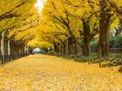 """Sững sờ trước những """"đường hầm cây"""" đẹp mê hồn"""