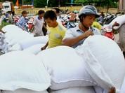7 tỉnh đề xuất cứu trợ 7.000 tấn gạo cho gần 500.000 nhân khẩu