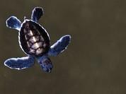 Nga bắt giữ hơn 150 con rùa và kỳ nhông từ Việt Nam tại sân bay
