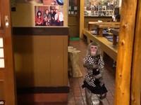 """Độc đáo """"bồi bàn"""" khỉ phục vụ quán bar"""