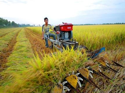 Chính phủ muốn nới chính sách để tăng tích tụ đất đai