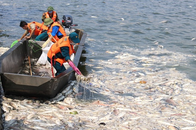 Hơn 200 tấn cá Hồ Tây chết bất thường những ngày qua.
