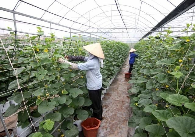 http://image.viettimes.vn/650x450/Uploaded/Quangvung/2017_05_15/ungdung_ZNIB.jpg