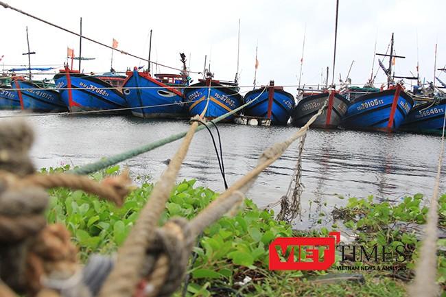 Tính đến thời điểm hiện tại, Đà Nẵng đã có hơn 1.700 phương tiện/6.500 lao động của các tỉnh đã vào neo đậu tại bờ.