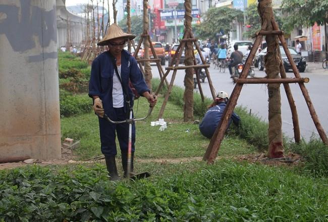 Công nhân chật vật cắt cỏ dại trên phố.