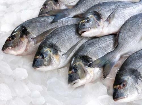 Huế tồn kho gần 500 tấn cá biển.