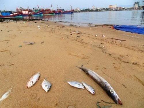 Tổng số tiền bồi thường thiệt hại môi trường tại huyện Lộc Hà, Hà Tĩnh là 207 tỷ đồng.