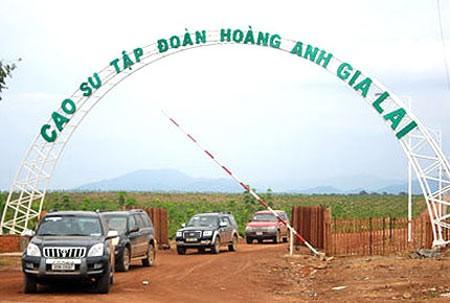 HAG và HNG chậm công bố theo quy định còn vì có nhiều công ty ở nước ngoài. (Ảnh: Internet)