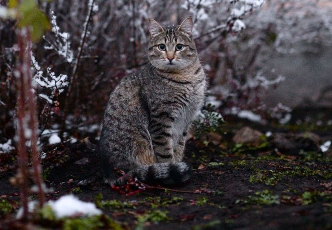 Video: Mèo dựng hầm trú ẩn trong tuyết