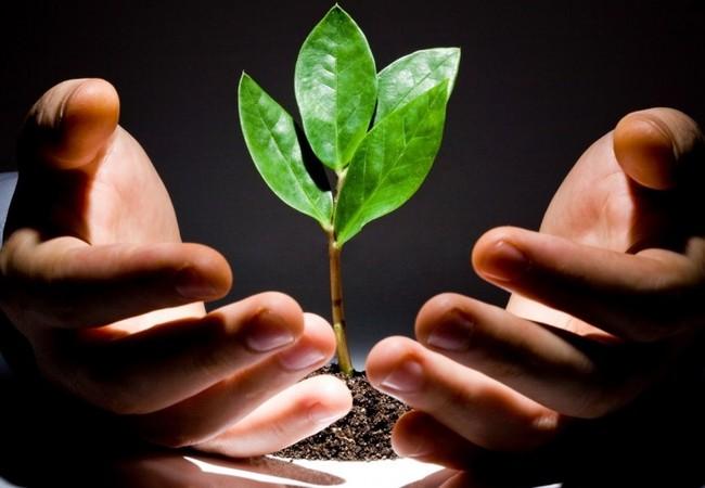 Người tiêu dùng ngày càng có nhu cầu lớn với các sản phẩm nông nghiệp, nông nghiệp hữu cơ.