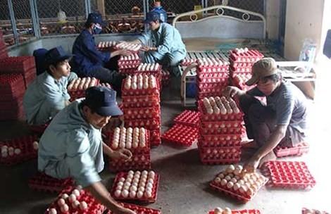 Nhiều bộ, ngành cùng quản một quả trứng nhưng lại thiếu sự thống nhất khiến doanh nghiệp gặp khó khăn.